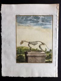Buffon 1768 Antique Hand Col Print. Rodent Skeleton 7-21